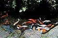 紫藤廬花園內的魚池.jpg