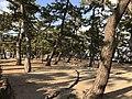 芦屋公園.jpg