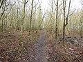 -2019-12-06 Footpath, Foxhills wood, Frogshall, Northrepps (2).JPG