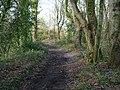 -2021-01-21 Footpath through Bryant's Heath, Felmingham, Norfolk (1).jpg