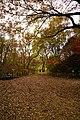 171125 Kobe Municipal Forest Botanical Garden14s3.jpg