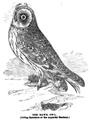 1862 owl Aquarial and ZoologicalGardens Boston Ballous.png