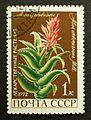 1972. Алоэ древовидное Soviet stamp 1k.jpg