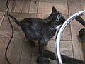19990920 kitty1 (8653573470).jpg