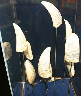 Scrimshaw - A small collection of scrimshaw