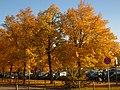 2011-10-31-160040 .JPG - panoramio.jpg