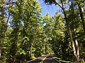 2016-08-27 12 20 45 View north through thick forest along Maryland State Route 224 (Riverside Road) at Sandy Point Road in western Charles County, Maryland.jpg