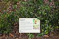 2016 Singapur, Ogrody botaniczne (140).jpg