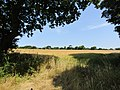 2018-07-25 Countryside view, Paston way, Foxhills woods, Northrepps, Norfolk.JPG