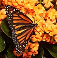 2019-04-15 13-04-47 jardin-papillons-hunawihr.jpg