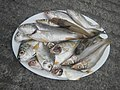 2492Fishes of the Philippines and Oysters 05.jpg