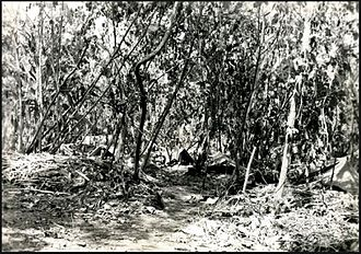 19th Marine Regiment (United States) - Third Battalion 19th Marines (25th NCB) tent camp on Bougainville