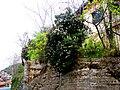 A@a colors palehori village cyprus - panoramio (2).jpg