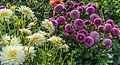 ADD SOME COLOUR TO YOUR LIFE (FLOWERS IN A PUBLIC PARK)-120137 (28984784670).jpg