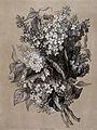 A bunch of flowering lilacs (Syringa vulgaris). Lithograph b Wellcome V0044597.jpg