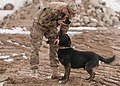 A dog's life, Mine dogs train to save lives 130108-A-GH622-035.jpg