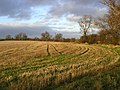 A field next to Hollins Lane - geograph.org.uk - 312261.jpg