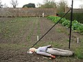 A resting scarecrow - Wimpole Hall - geograph.org.uk - 1735174.jpg