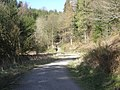 A track through the woods - geograph.org.uk - 1242300.jpg