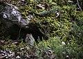 A vole sits outside a small hole near a tree trunk on the Roadside Trail in Denali (fa248ef8-08d3-4fc4-89dd-12713c79e489).JPG