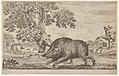 A wild boar running towards the left, a dog biting its ear behind to left, other dogs and horsemen in the background, from 'Hunts of various animals' (Chasses à différents animaux) MET DP833249.jpg