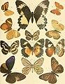 Abhandlungen der Senckenbergischen Naturforschenden Gesellschaft (1897-1903) (16145281614).jpg
