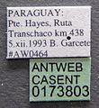 Acromyrmex striatus casent0173803 label 1.jpg