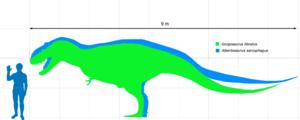 Albertosaurinae - Size comparison of Albertosaurus (blue) with Gorgosaurus (green) and a human