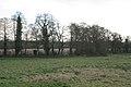 Alders by a brook, Darley Green B94 - geograph.org.uk - 2191160.jpg