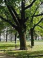 Alexandr II oak.jpg