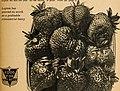 Allen's 1945 book of berries (1945) (17924344186).jpg