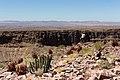 Aloe gariepensis på Fish river canyon-0489 - Flickr - Ragnhild & Neil Crawford.jpg