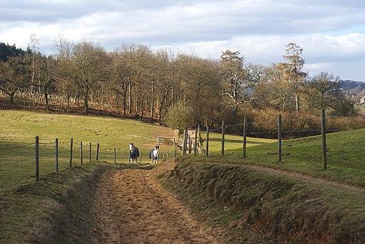 Along the Pilgrims' Way, Near Chilworth - geograph.org.uk - 1705732