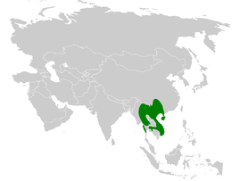 Alophoixus pallidus distribution map.png