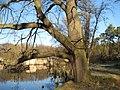 Alt wie ein Baum....- Schumkesee Sperenberg - panoramio.jpg