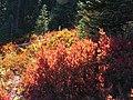 Alta Vista early September 2015. (ef177c997a7c496b9a4701ea4f3755fa).JPG