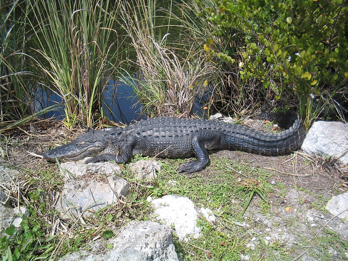 Everglades National Park | Eco Tours | Everglades airboat tour | Private airboat rides