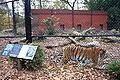 Amur Tiger enclosure, Beardsley Zoo, 2009-11-06.jpg