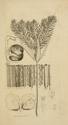 An introduction to physiological and systematical botany - Plate 1.png