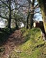 Ancient Road - geograph.org.uk - 1251575.jpg