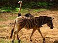 Animais do Jardim Zoológico de São Paulo 16.JPG