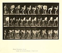 Animal locomotion. Plate 508 (Boston Public Library).jpg
