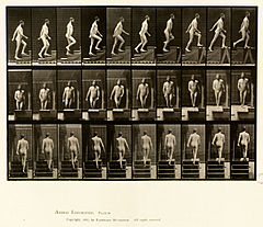 Animal locomotion. Plate 90 (Boston Public Library).jpg
