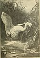 Animals in action; studies and stories of beasts, birds and reptiles; their habits, their homes and their peculiarities (1901) (14752231531).jpg