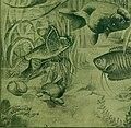 Aquatic life (1918-1919) (19559378788).jpg