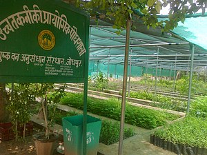 Arid Forest Research Institute - Model Nursery