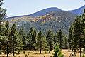 Aspen on mountainside (3972201944).jpg
