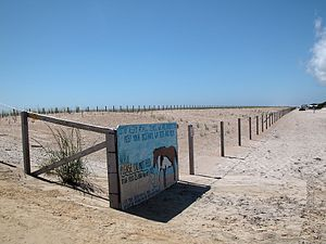 Assateague Island National Seashore - Image: Assateague fg 01