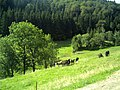 August Mount Kandel Masif Hochschwarzwald - Master Black Forest Photography 2014 - panoramio (5).jpg