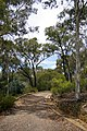 Australian National Botanic Gardens on the Telstra Tower Walk.jpg